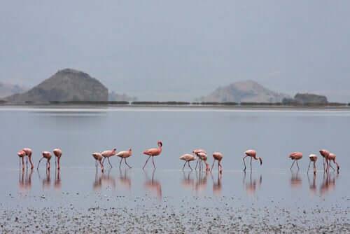 Flamingi - kolor.