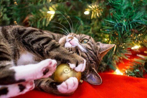 Kot bawi się bombką