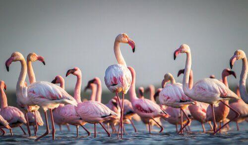Flamingi - kilka ciekawostek na ich temat