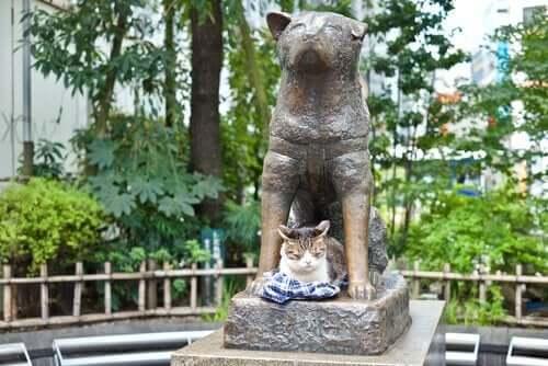 Historia Hachiko i 4 psów, które poszły jego śladem
