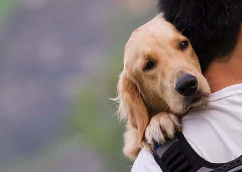 pies w ramionach
