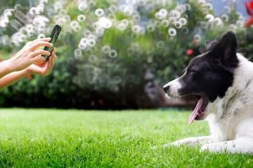 fotografowanie psów porady