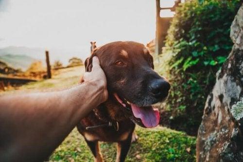 pies szczęśliwy odrobaczanie