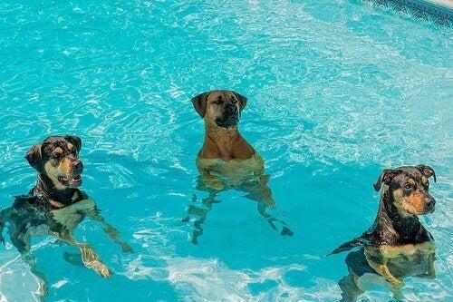 psy w wodzie