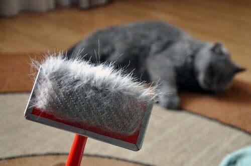 Linienie u kotów - jakie są zagrożenia?