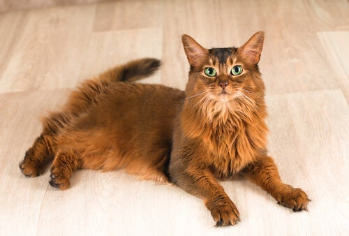 piękny rudy kot z zielonymi oczami