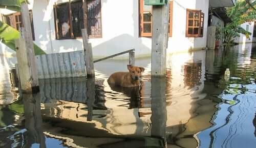 Opieka nad zwierzętami w trakcie powodzi
