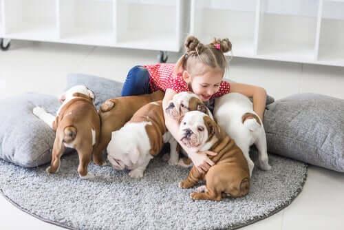 Ile zwierząt mogę legalnie mieć w domu?