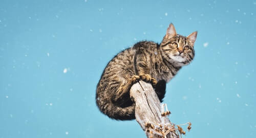 kot wspinaczka