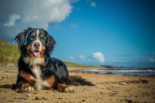 Infekcje latem: czym może zarazić się Twój pies?