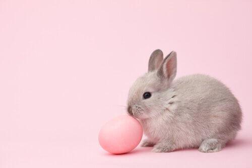 oryginalne imiona dla królików