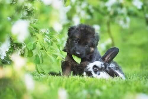pies i królik bawiący się razem