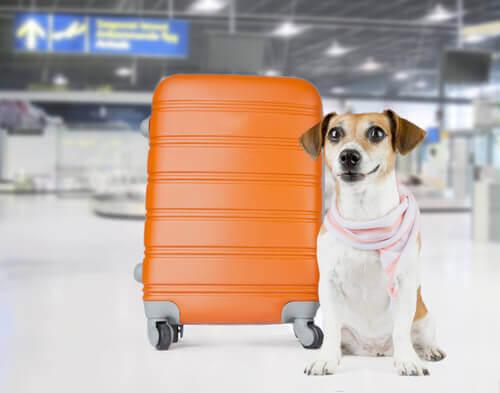 pies i walizka a przewóz zwierząt