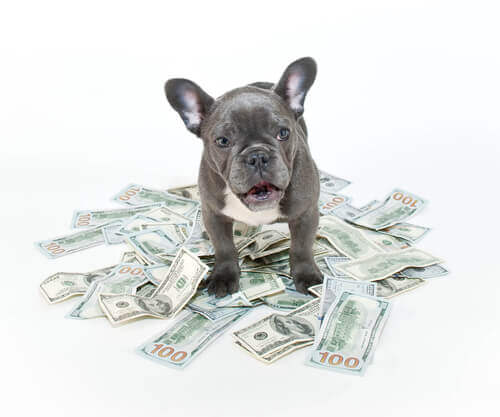 pies na pieniądzach