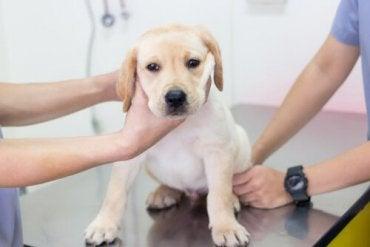 Znęcanie się nad zwierzętami w klinice weterynaryjnej