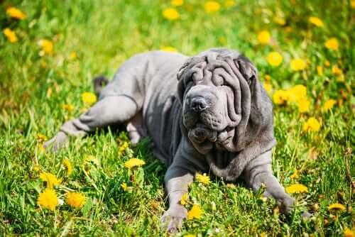 pies wśród kwiatów