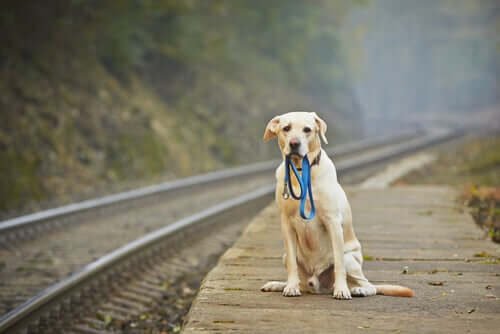 smutny pies na peronie