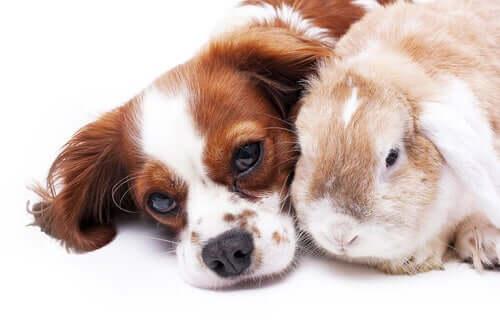 śpiący pies i królik