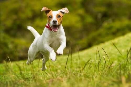 Szczęśliwy pies - sygnały, które o tym świadczą