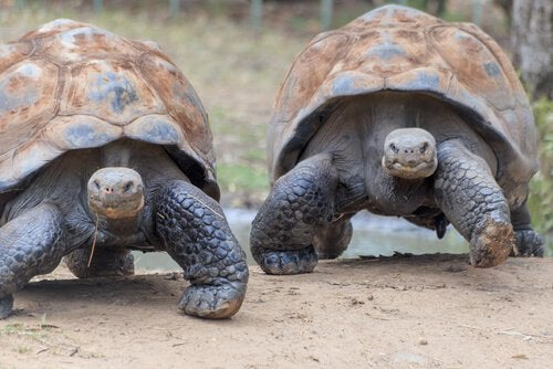 Wyspy Galapagos i dzikie zwierzęta tam żyjące