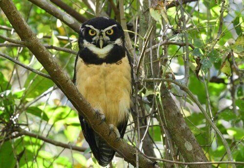 Zwierzęta w okularach – 5 ciekawych gatunków