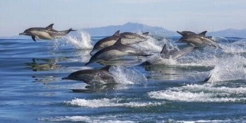 Zachowanie delfinów w stadzie