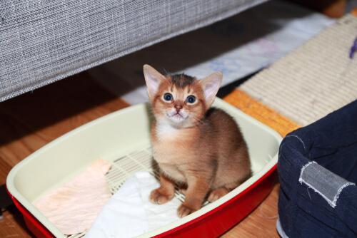 Kociak siedzi w kuwecie, złe zachowanie kota