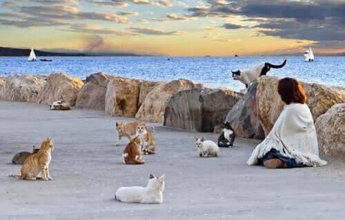 Zbiorowiska kotów – dlaczego powinny być kontrolowane?