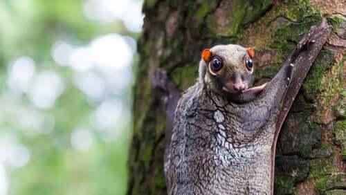 Zwierzęta żyjące na drzewach – 5 gatunków