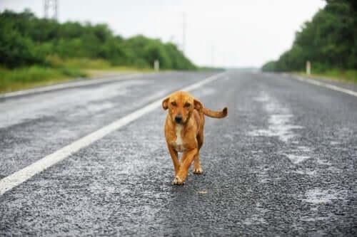 Pies idący ulicą