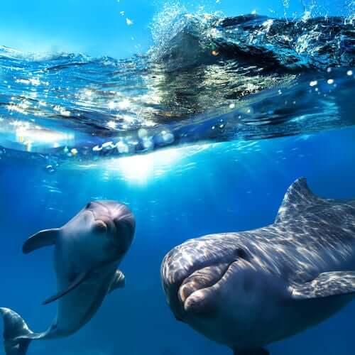 Delfiny bawią się pod wodą