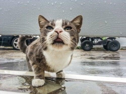 Chory kot z gorączką