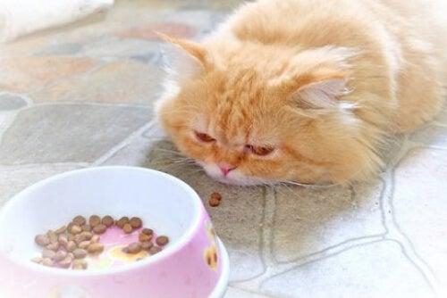 Mały kot, który ma gorączkę, zazwyczaj nie chce jeść.