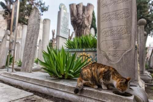 Stambuł: poznaj bliżej to wyjątkowe miasto kotów