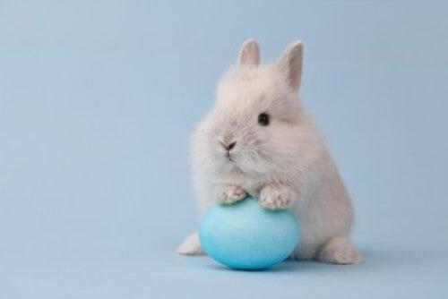 Mały biały królik miniaturka.