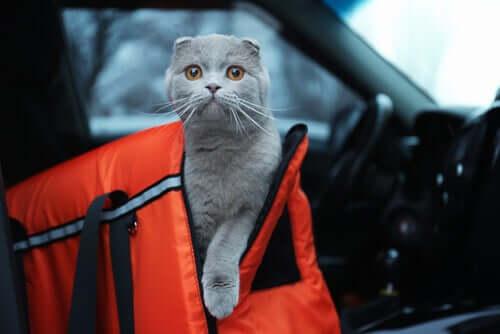 podróżowanie z kotem a jazda samochodem