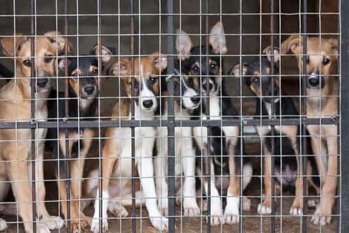 porzucone zwierzęta psy za kratkami