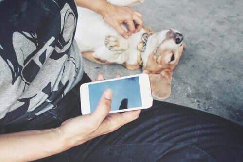 Sieci społecznościowe pomogą, jeśli zaginął zwierzak