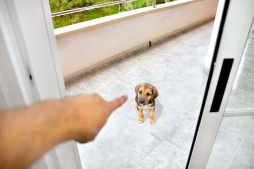szacunek psa kara
