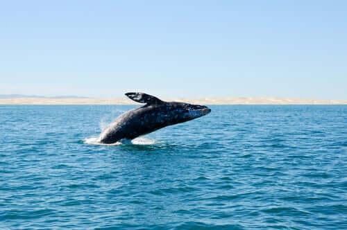 Wymarłe wieloryby odkryte na hiszpańskich wybrzeżach