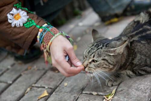 Zaufanie bezpańskiego kota – jak je zdobyć?