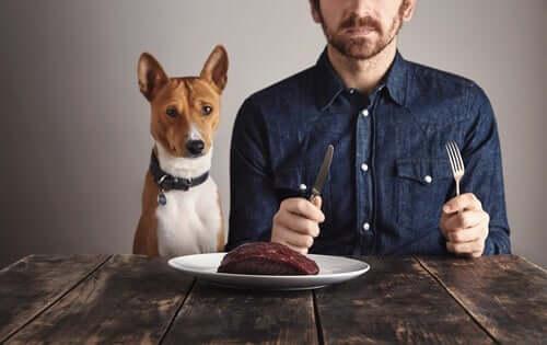 Białko – jakie ma znaczenie w żywieniu psów