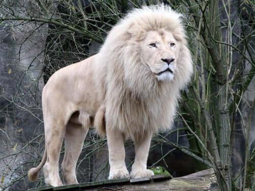 Dzikie zwierzęta - 5 osobników, których nie spotkałeś