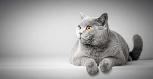 Język ciała kotów - co powinieneś wiedzieć?