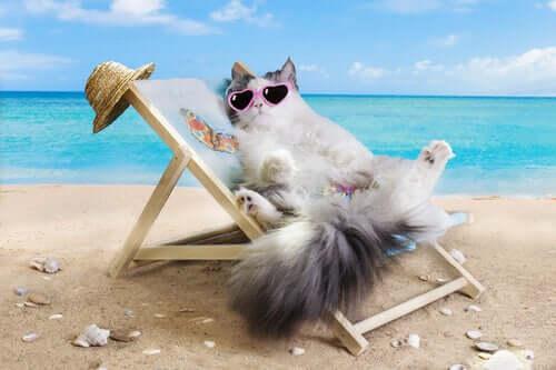 Idealna plaża dla kotów