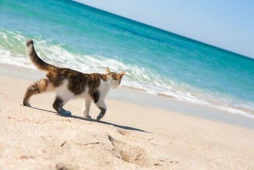 Plaża dla kotów - czy istnieją takie miejsca?
