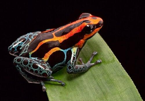 Poznaj 5 najbardziej śmiercionośnych zwierząt