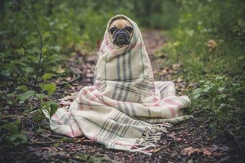 Grypa u psów - zapobieganie i opieka nad chorym zwierzęciem