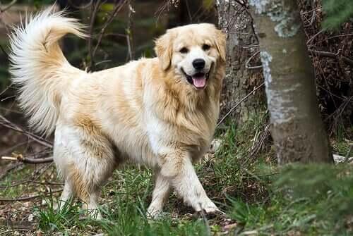 pies w lesie a infekcja pęcherza