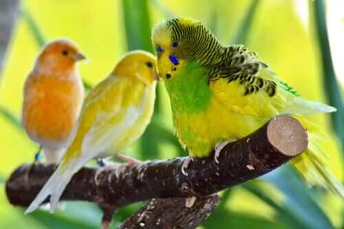 Które ptaki są najlepszymi zwierzętami domowymi?